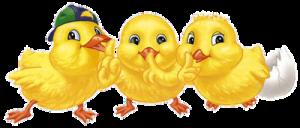 kurczaki trzy-GIF_1